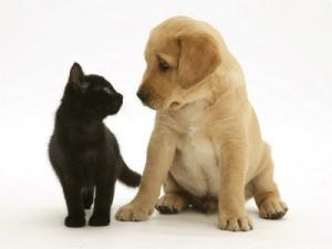 fotos-cachorros-e-gatos-12