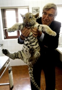 tigre maia