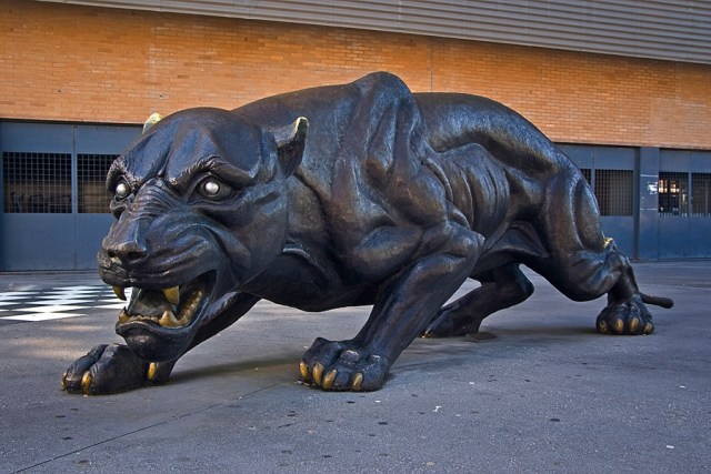 pantera-boavista