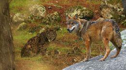 """Fotograma de la película-documental """"Wildmed, el último bosque mediterráneo"""", que se proyectará en el Festival"""