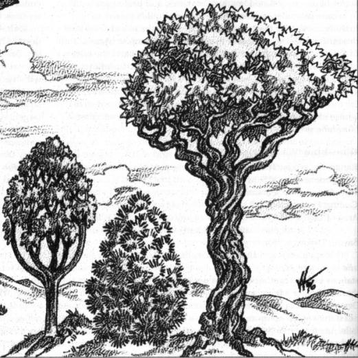 hiexellasparphandar