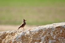 vite un oiseau II