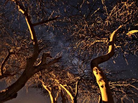 la voie lactee a travers les branches de l'accacia