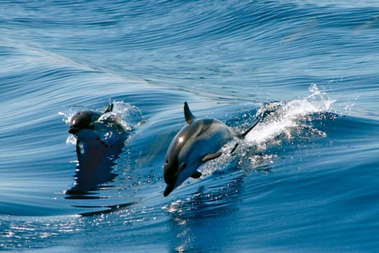 delfini gibraltar