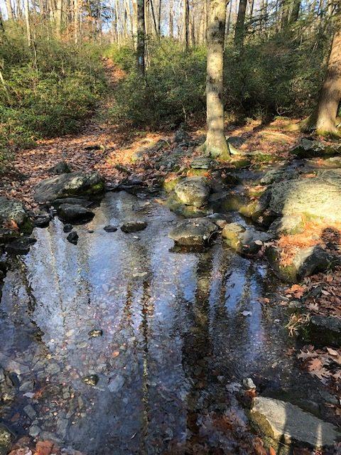 Water on Undermountain Trail