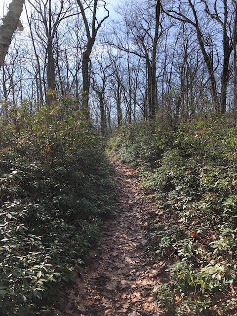 Trail Between Bear Mountain & Lions Head