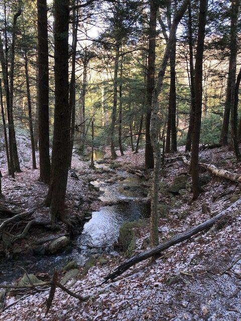 Creek in Sages Ravine