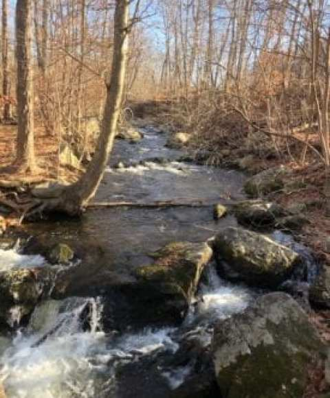 Creek Near Route 55 at Beginning of Hike to Mount Egbert