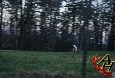 running whitetail deer
