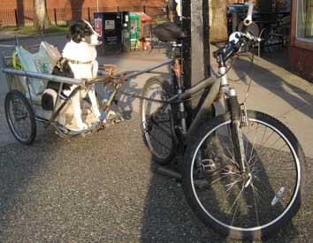 Dog-on-a-bike-trailer