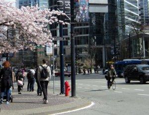 Bikes and blossoms 3  average joe cyclist