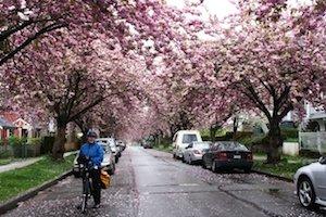 Mrs Average Joe Cyclist