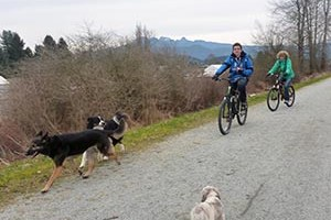 The Osprey Loop In Pitt Meadows – Dog Friendly Trail for Cycling and Hiking