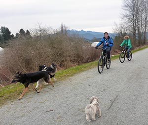 Cyclists and dogs mix it up happily on the Osprey Link dog friendly trail