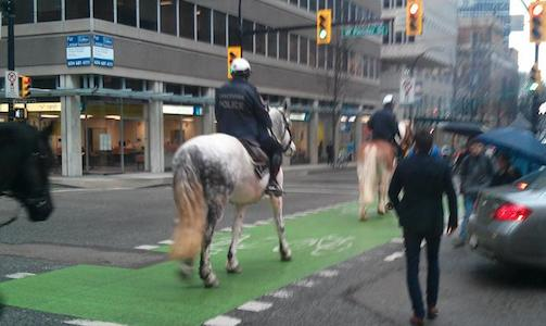 Horses on Hornby Street, on their way to Pender, in the safety of the separated bike lanes in Vancouver.