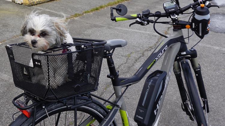 Once you find the right basket it will be a joy to include your dog on your travels! How to Carry your Dog Safely on Your Bike in a Pet Basket