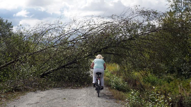 In several places smaller trees had been knocked down, requiring some careful cycling. Poco Trail_fallen trees 2