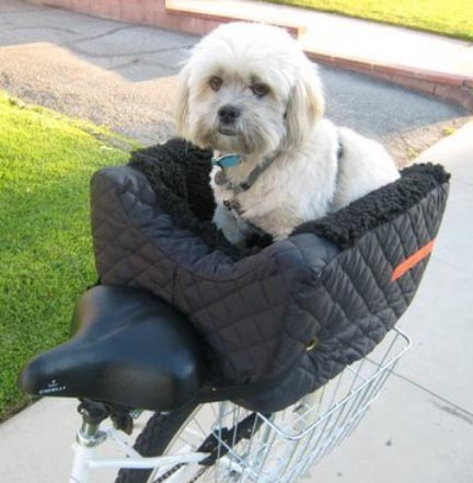 This rear pet basket sits on your bike rack, and can carry a dog up to 24 pounds - which means it could carry BOTH of our dogs - but somehow I don't think they'd appreciate that at all! How to Carry your Dog Safely on Your Bike in a Pet Basket
