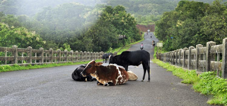 The cycling experience in the Konkan region is incomparable. 5 thrilling bike rides in india