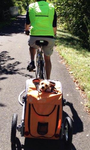 5 Of The Best Dog Bike Baskets Average Joe Cyclist