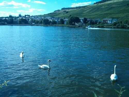 The route is very varied and sometimes goes near the Mosel river
