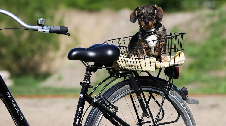 How to Gently Train Your Dog to Go On Bike Rides With You