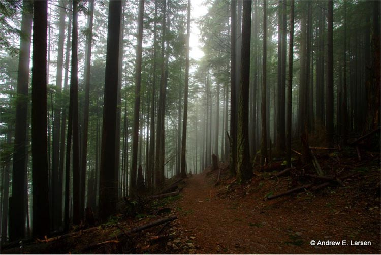6 Can't-Miss Places to Ride Your Bike in Washington. Tiger Mountain – East Tiger Summit, near Seattle, WA