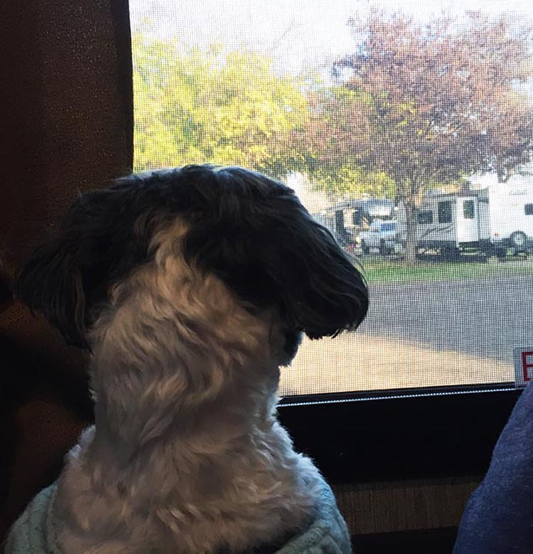 Ripley keeping an eye on the neighbors!