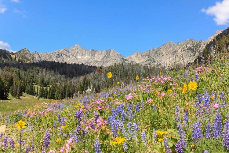 Mountain to Meadow Route, Big Sky (MT). Photo by Visit Big Sky