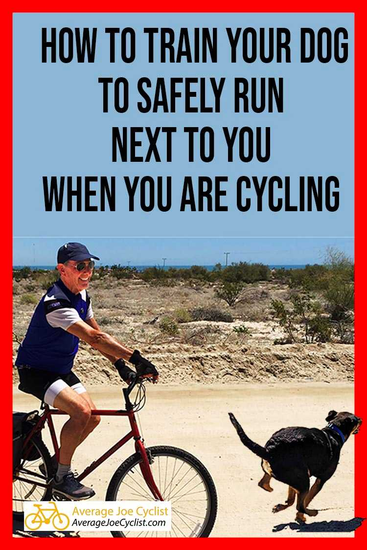 How to Train Your Dog to Safely Run Next to You When You Are Cycling