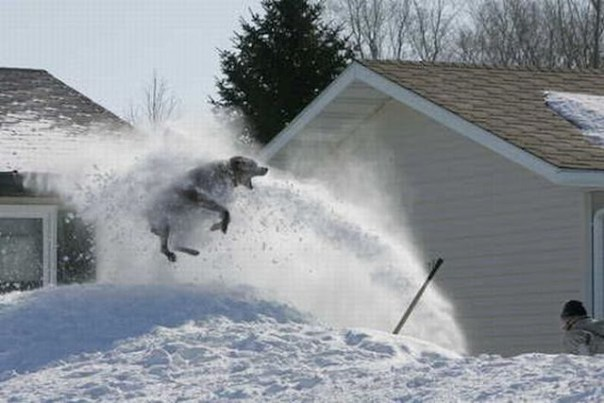 Dog-Plays-with-Snow-Blower