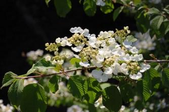 White blooms on dark background