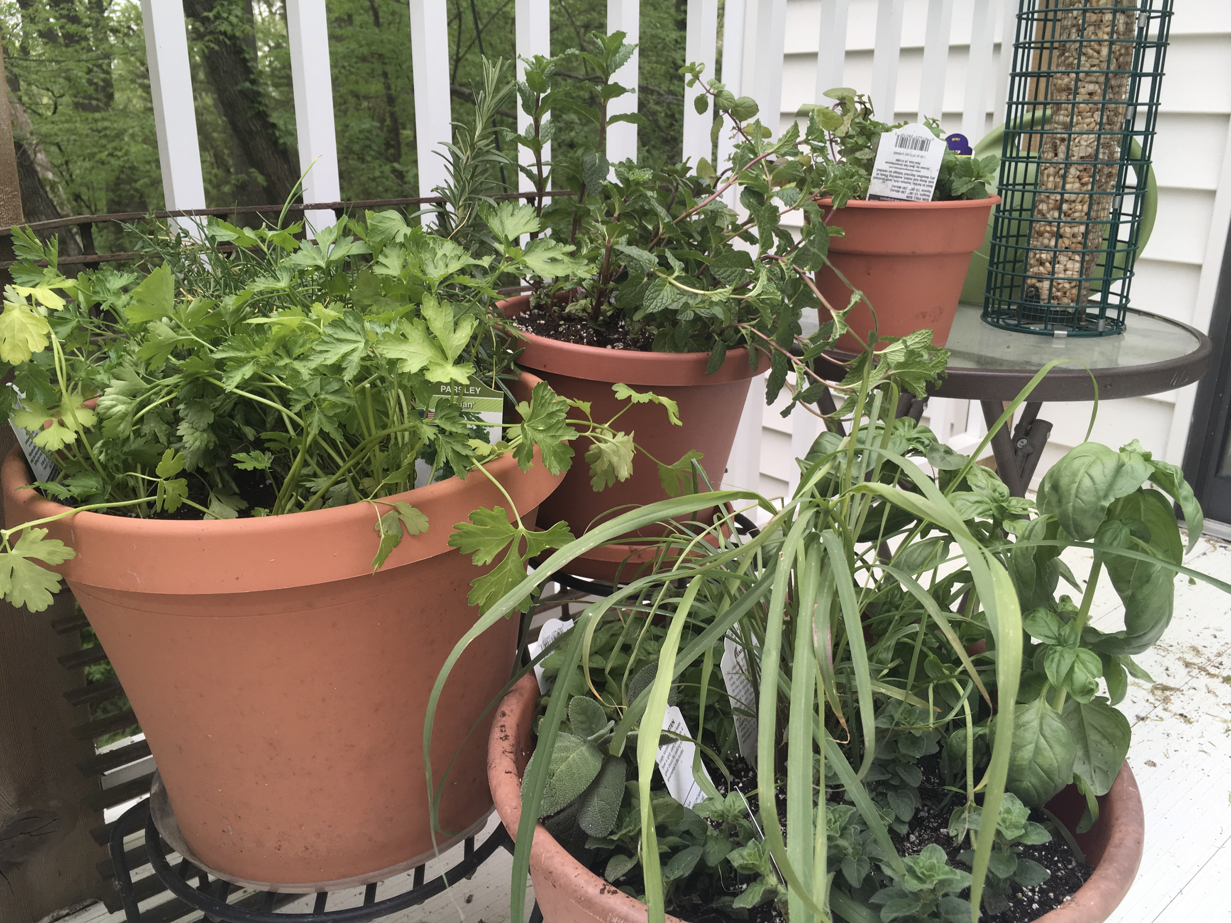 Herb Pots, Tomato Plants and What's Been Happening in My Kitchen