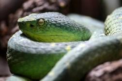 Snake Portraits by Ave Valencia