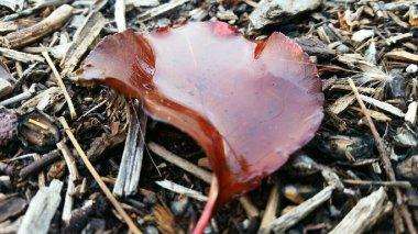 red-leaf-ojai-3-avevalencia.jpg