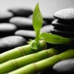 Bambus / zen