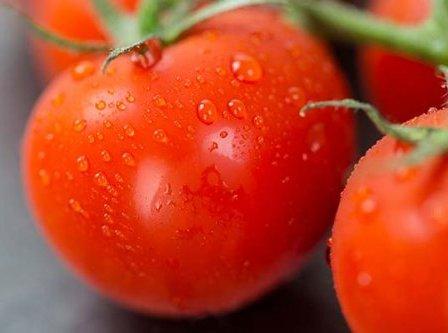 Чем опрыскать помидоры от фитофторы