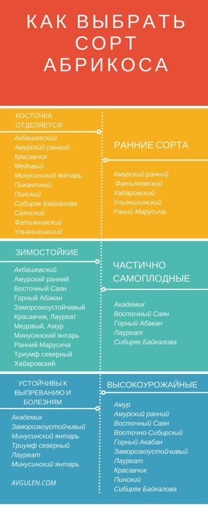 Сорта абрикоса - инфографика