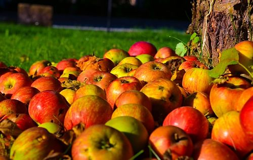 Осенняя подкормка деревьев