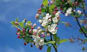 Чем подкормить сад весной