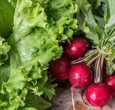 4 способа выращивания редиса