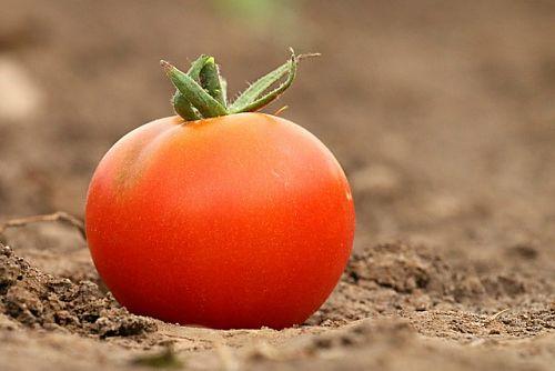 Чем удобрить землю в теплице: костная мука и зола