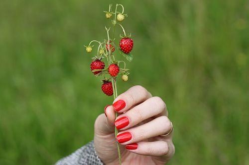 Уход за земляникой садовой весной