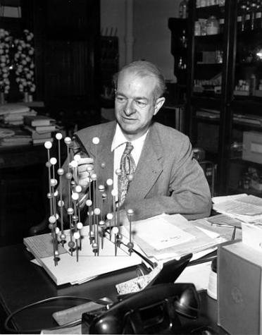 Dr. Linus Pauling, professor at the California Institute of Technology, examines a molecular model in his laboratory in Pasadena, Calif.