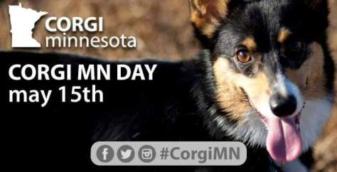 Corgi Minnesota Day