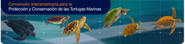 tartaruga marinha - imag-header