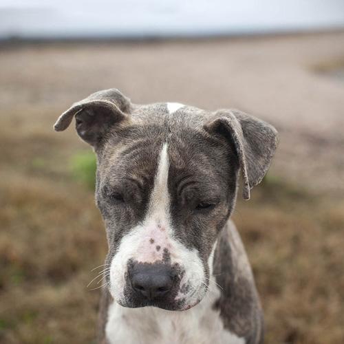shannon-johnstone-landfill-dogs-2