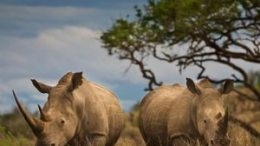 Qatar Airways joins USAID ROUTES Partnership to combat wildlife trafficking 86