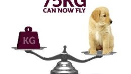 Qatar Airways reduces prices and doubles weight allowance for transporting domestic pets 31