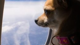 IATA launches new program to improve safety of animals traveling by air 31
